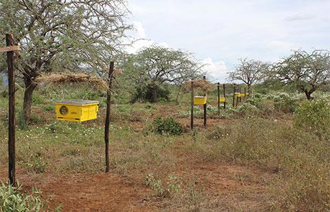 KING-Langstroth-beehive-fence-line-Tsavo