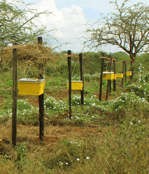 Langstroth beehive fence line in Tsavo