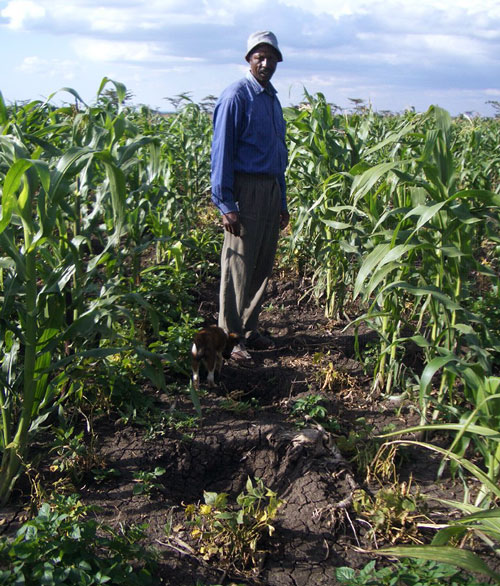 crop-raided-farm