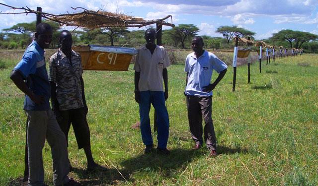 Ngare Mara beehive fence