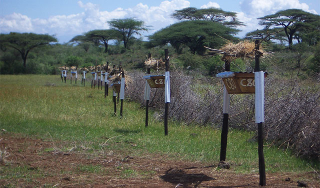 King-beehive-fence-line-Kenya1