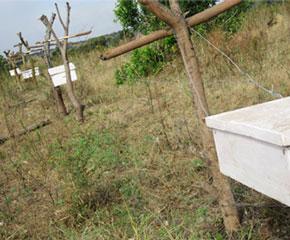 SEDEREC Serengeti beehive fence line