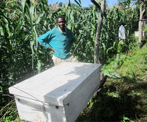 SEDEREC Serengeti beehive fences
