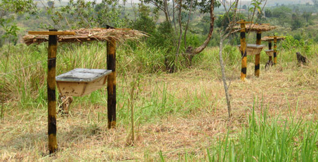 Queen Elizabeth Beehive Fence line - Malaika Honey