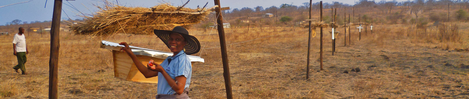 Botswana Farmer finishing construction of a beehive fence