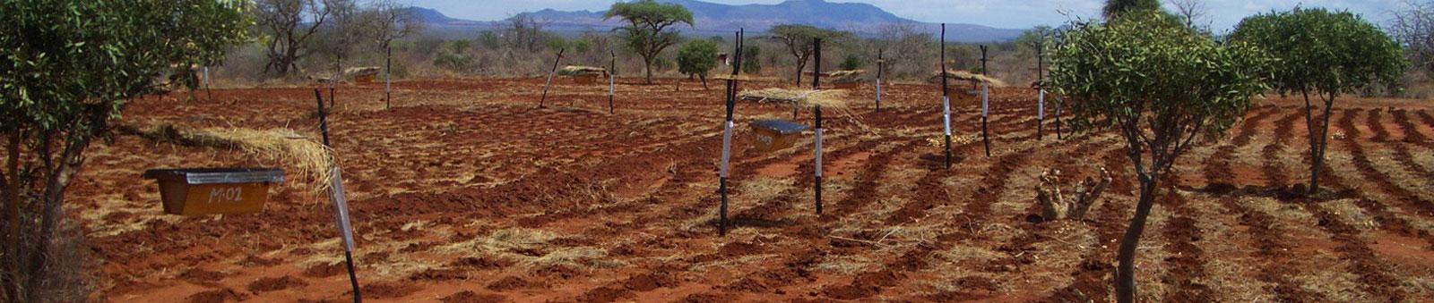 Kenya Beehive Fence