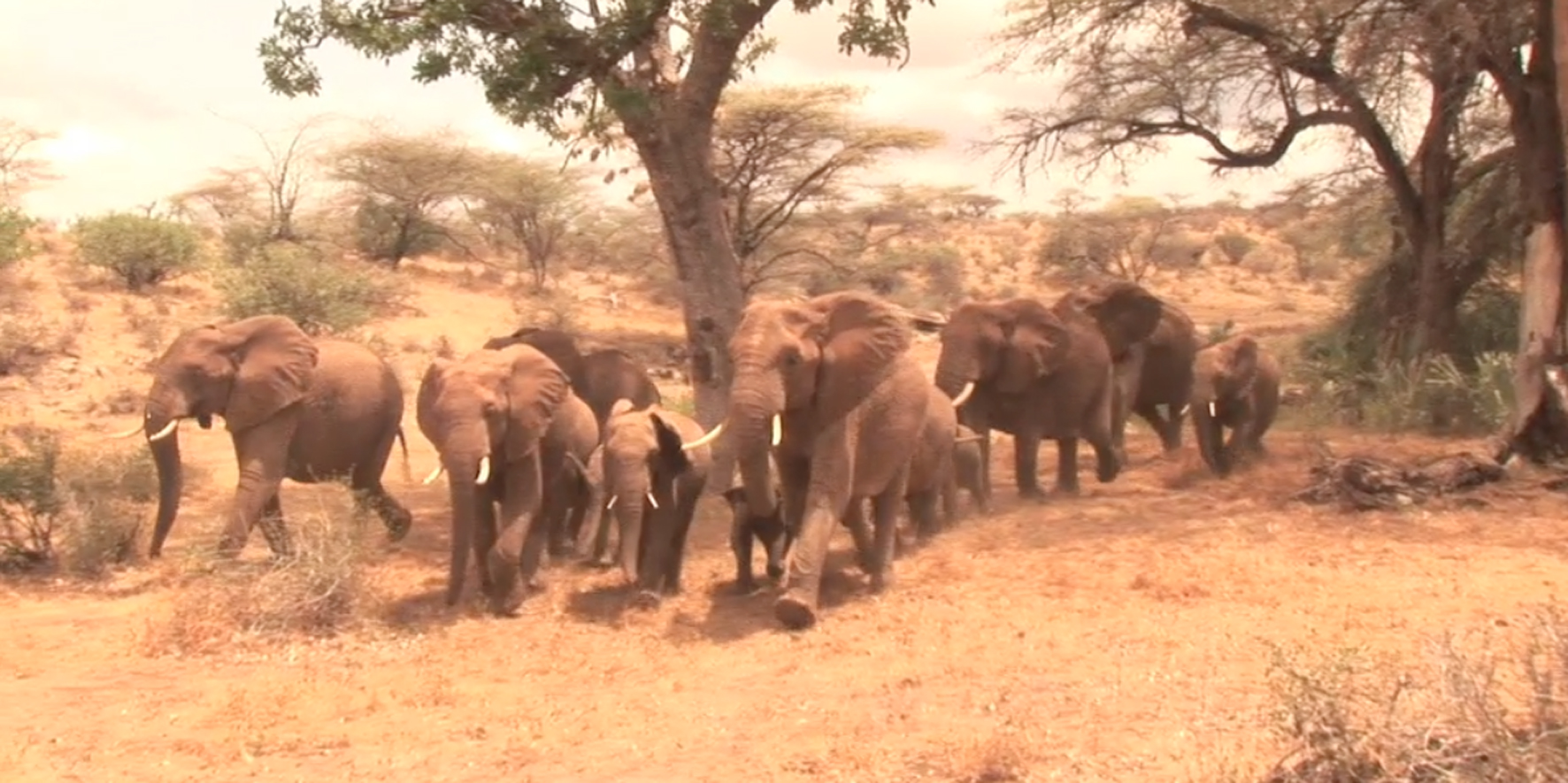 KING-Family-Running-Away-from-Samburu-Voices