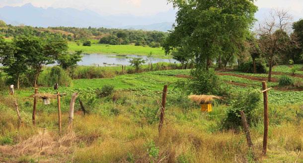 SRI-LANKA-Beehive-fence-around-farm