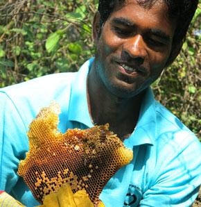 Honeycomb from Apis cerana bees