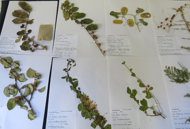 Elephants bees sagalla herbarium bee fodder project - Model herbarium ...