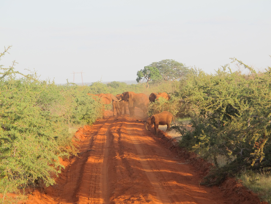 CROP-RAIDINg-Elephants-in-the-community