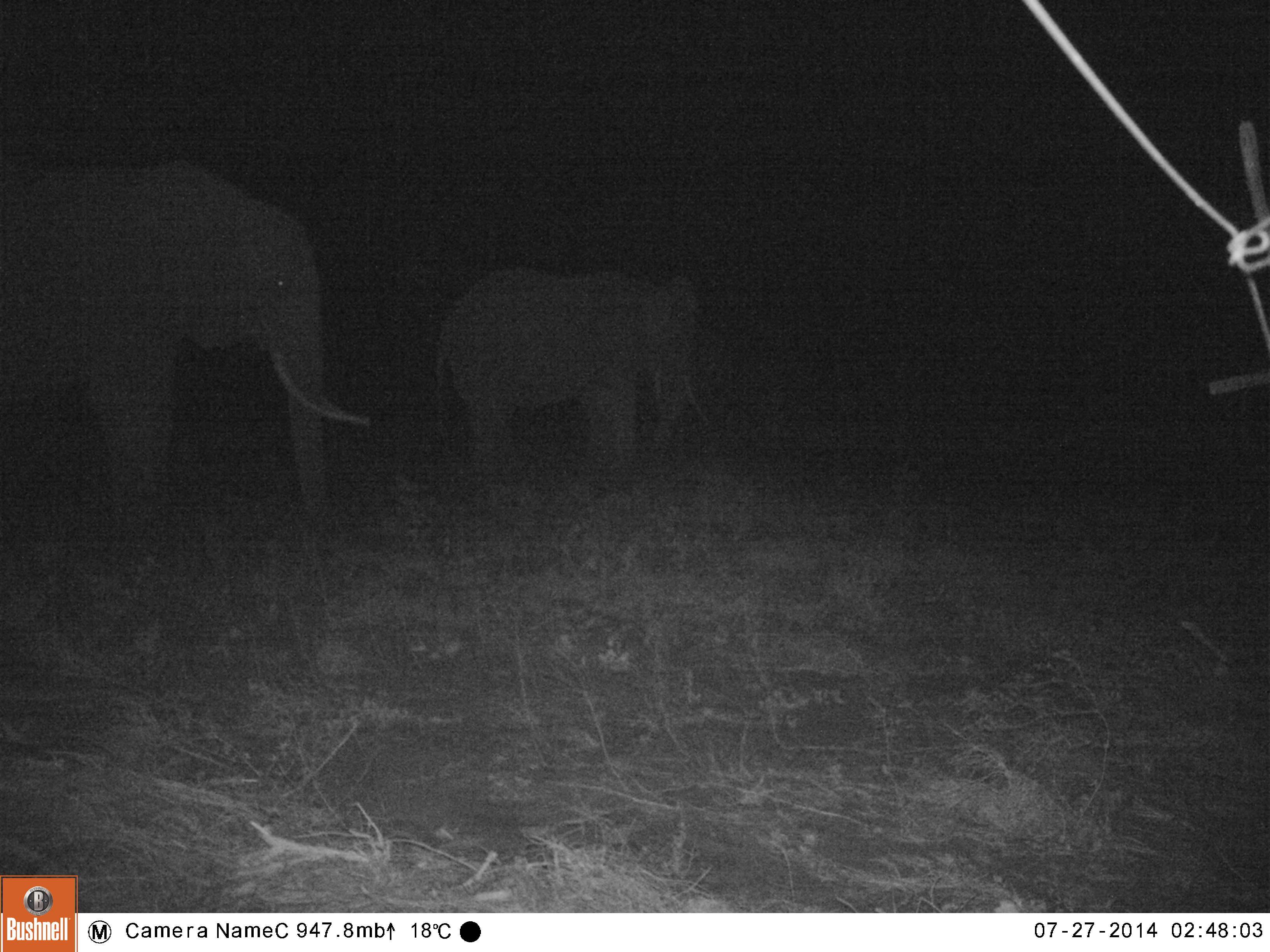 EK000118-African-elephants-Africana-loxodanta