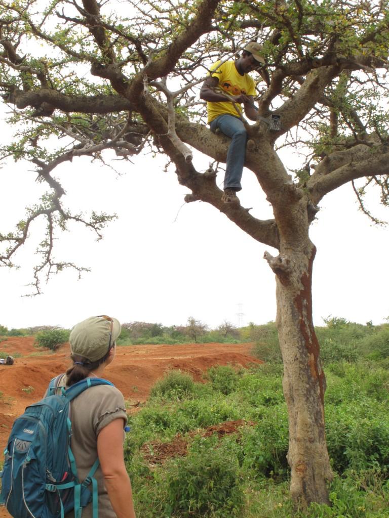 MAMMAL MONITORING - camera traps in trees