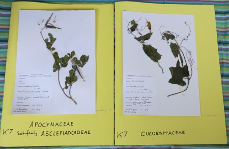 POLLINATION Herbarium photos