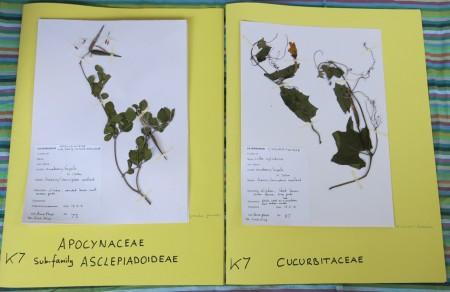 POLLINATION Herbarium photos