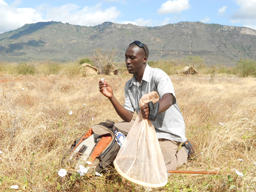 POLLINATION-Intern-Philip-Bett-from-Karatina-University-identifying-bees-in-the-field