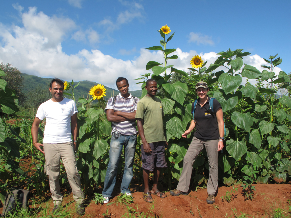 POLLINATION-Sunflowers-with-our-team