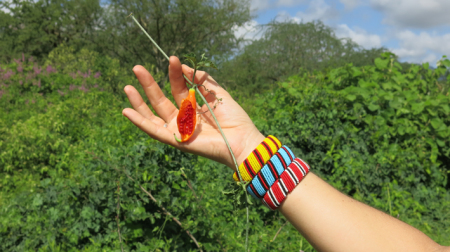 Seed pod in hand