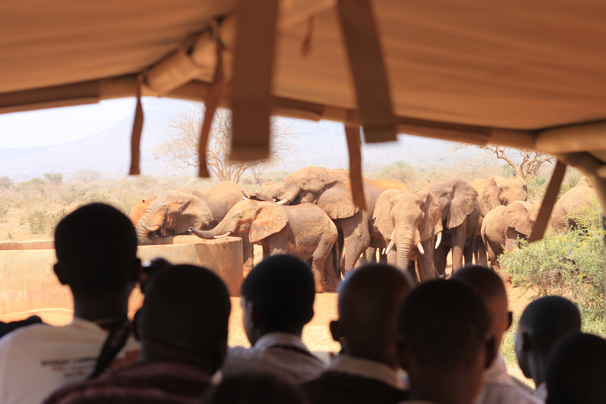 KING-Tsavo-Kids-on-fieldtrip-watching-elephants-s