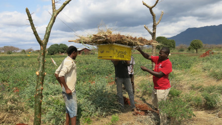 SMN hives being hung