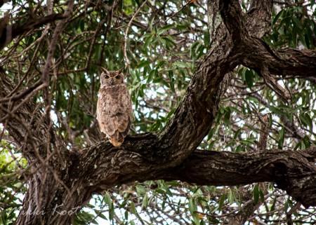 Owl in fieldtrip (web)