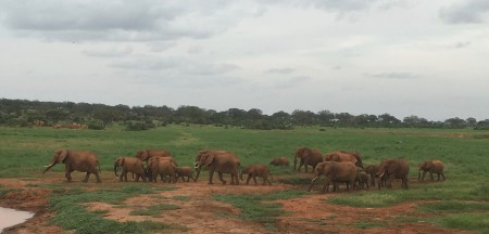 Enjoying the company of elephants at Voi