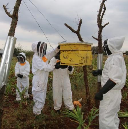 honeyharvesting