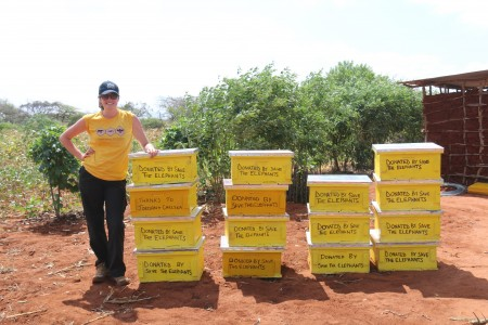 The donated beehives that were hung at Daudi's farm in Mwambiti