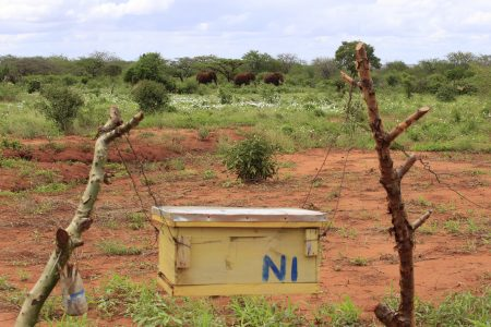 Beehive fence with elephants in the distance
