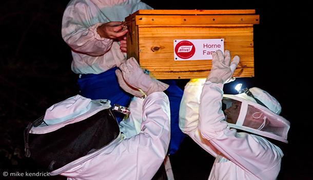 Beehive-maintenance