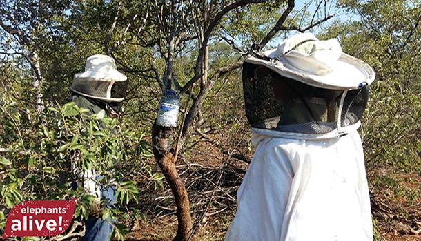 Feeding-Bees