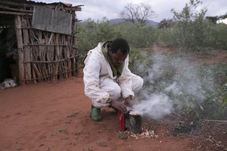 Emmanuel-one of the staff lighting the smoker - used to calm the bees