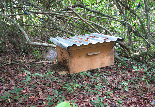 SN-A-hive-housing-a-hight-active-bee-colony