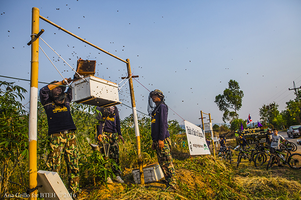 thai-beehive-fence
