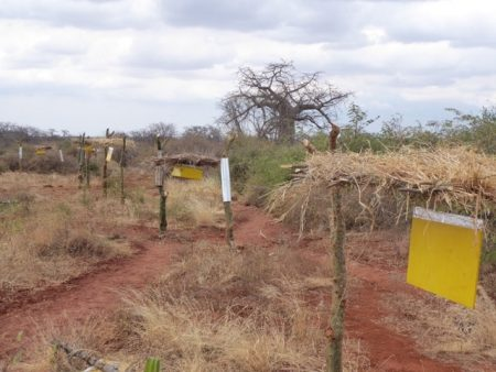 The newly repaired beehive fence