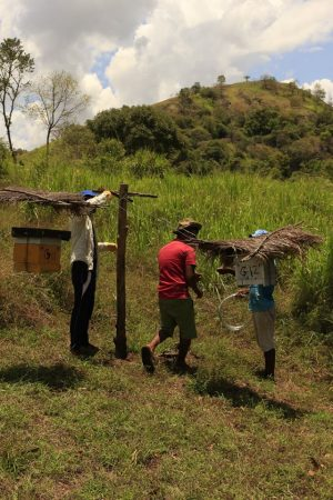 Fixing beehive fences at Somathilaka's farm