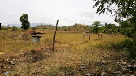 A beehive fence at Somathilaka's farm - at the moment there are no crops inside or outside of the fence however it is providing a barrier around his house, which is still vulnerable to elephant visits at this time of year