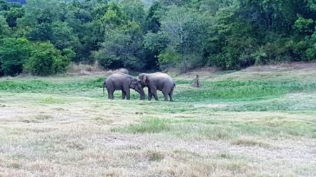 An elephant family comes to forage at the empty Weheragala Water Tank.