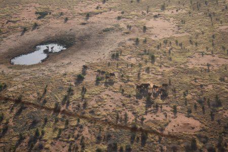 Huge heard of elephants near to water hole in Tsavo