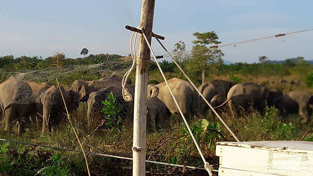 sm-Kaeng-Hang-Meow-2-Thailand_Phuluang-Wildlife-Research-Station