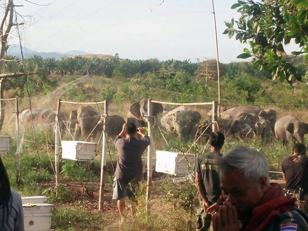 sm-Kaeng-Hang-Meow-Thailand_Phuluang-Wildlife-Research-Station-