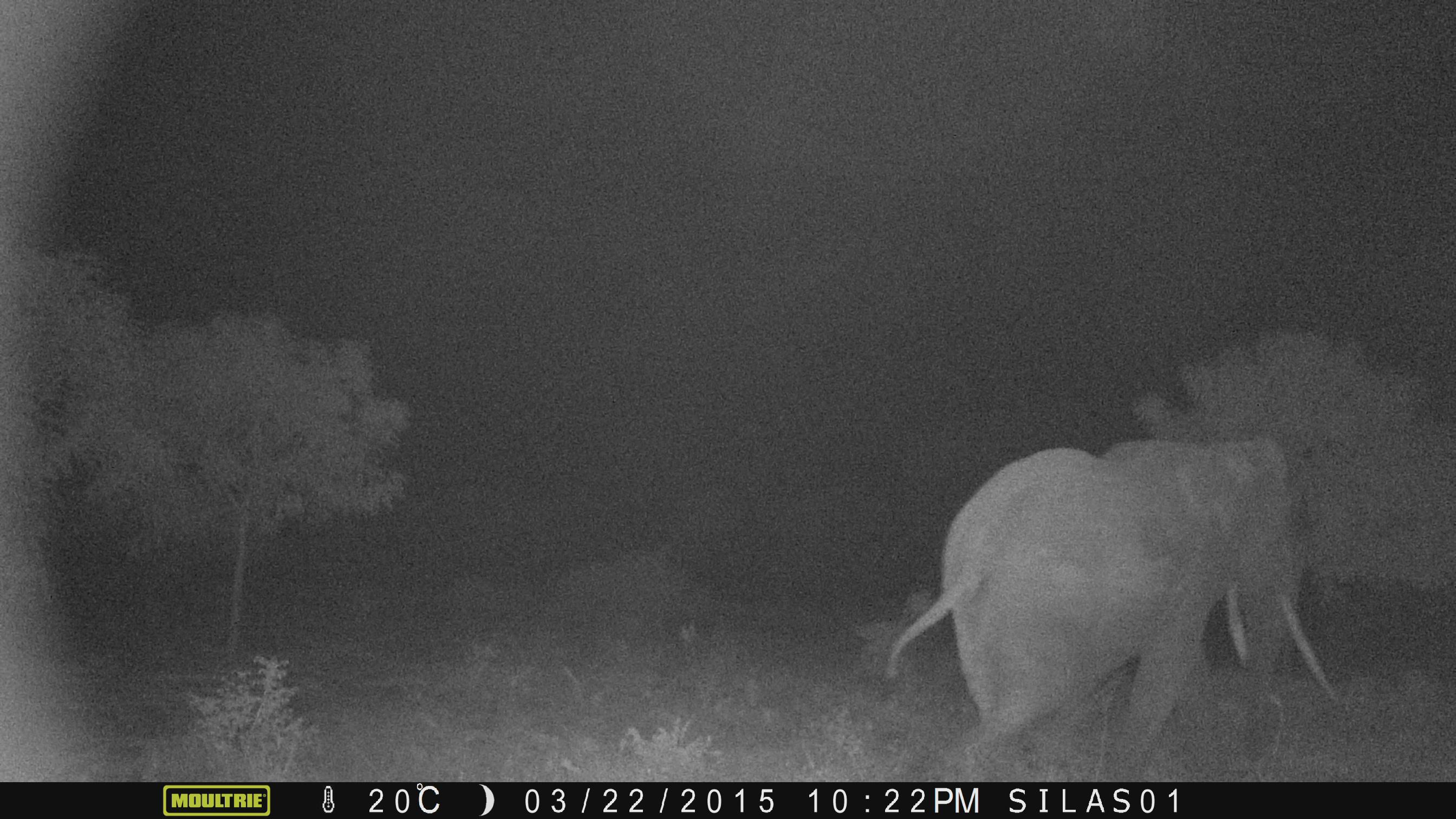 Crop-raiding-elephant-in-farm-at-night-captured-by-camera-trap-in-Sagalla-Kenya3-©-2015-EB