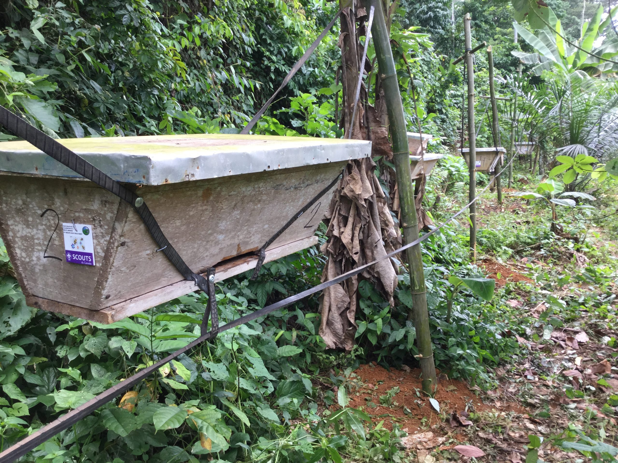 Beehive fence Cameroun